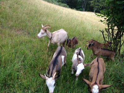 Camp des compagnons dans l'Aveyron 002